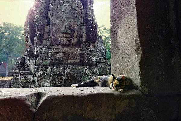 A calico cat sleeps at the Bayon Temple