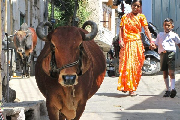 A smiling mother and son share the street with cows and motor cycles in Udaipur, India.