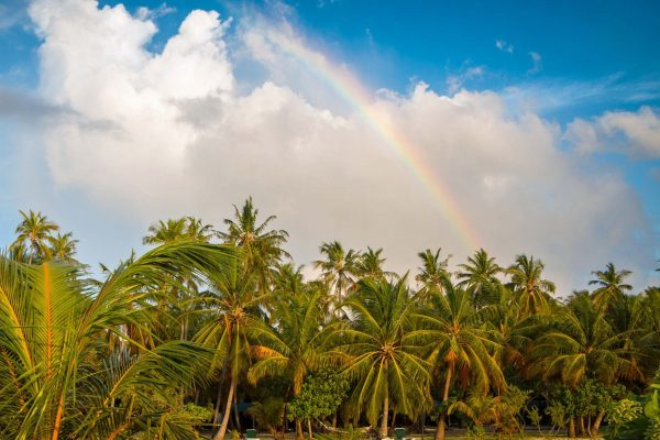 A rainbow brightens up the sky over palm trees in the Maldives
