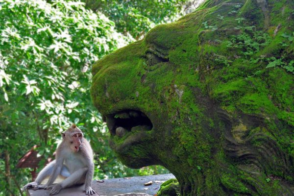 A moss covered lion statue appears to sneak up on a young macaque monkey who looks at it with shock at the Sacred Monkey Forest Sanctuary in Ubud, Bali, Indonesia.