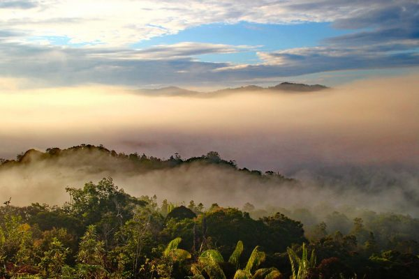 Heavy fog rolls over the lush green hills thick with foliage in Sarawak, Borneo, Malaysia
